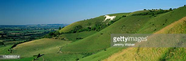 view of the westbury white horse and the pewsey vale in the wiltshire countryside - 炭酸石灰 ストックフォトと画像