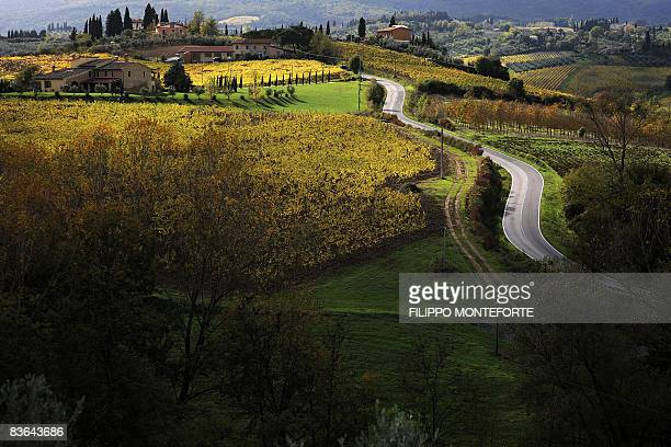 A view of the wineyard near San Gimignano on the Vernaccia road wine of San Gimignano Strada del vino di Vernaccia di San Gimignano in the Tuscany...