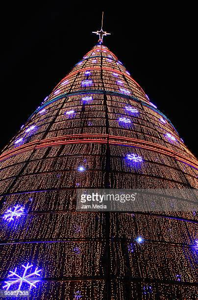 view of the worlds tallest christmas tree during the new years eve celebrations in mexico on - Worlds Tallest Christmas Tree
