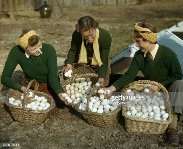 View of three Land Girls members of the Women's Land Army examining baskets of fresh eggs at Redlands breeding poultry farm in South Holmwood Surrey...
