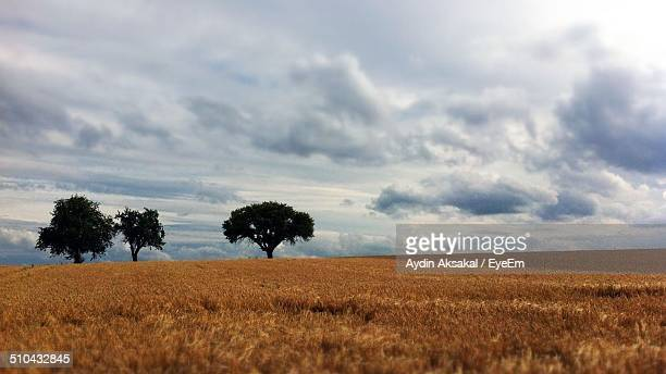 View of three trees on landscape against clouds