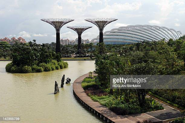 A view of towering Supertrees Grove one of the cooled conservatories dome sit in the Garden by the Bay in Singapore on April 3 2012 Situated at the...