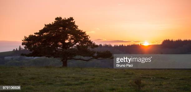 view of tree at sunset, aveyron, france - aveyron photos et images de collection