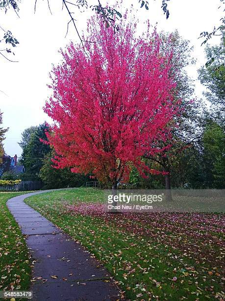 view of tree in autumn - corvallis stock pictures, royalty-free photos & images