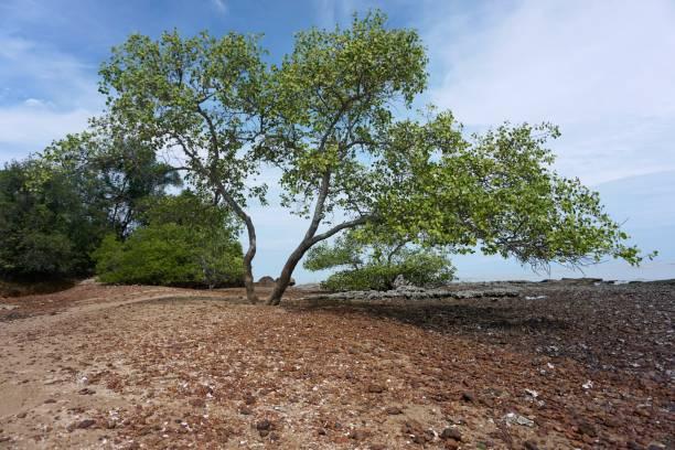View of tree, Pulau Konet, Malacca, Malaysia