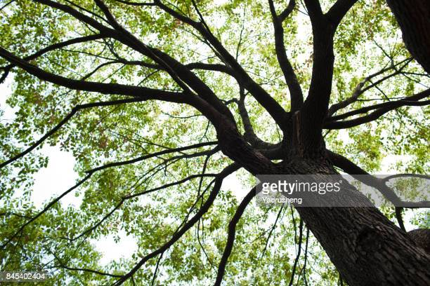 view of tree tops from below - ecosystem stock pictures, royalty-free photos & images
