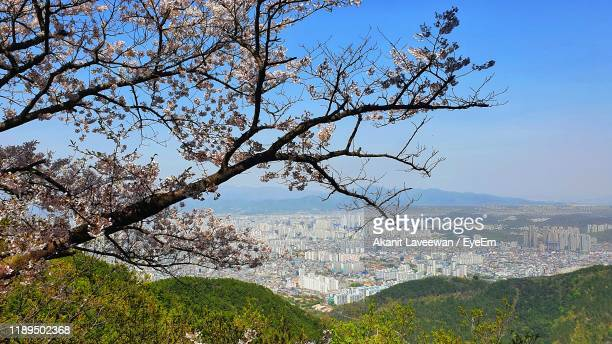 view of tree with buildings in background - daegu stock pictures, royalty-free photos & images
