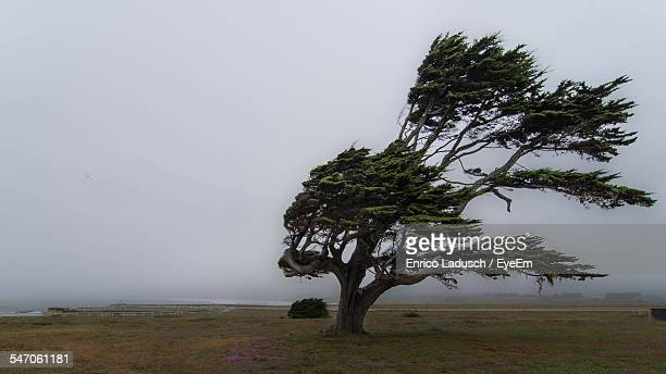 view of tree with wind - wind stock pictures, royalty-free photos & images