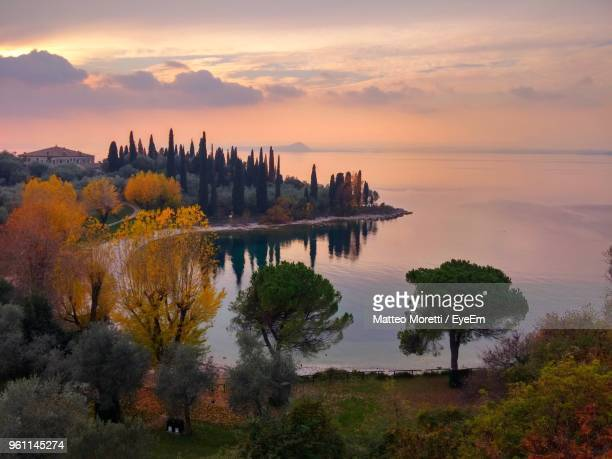 view of trees against cloudy sky during sunset - lake garda stock pictures, royalty-free photos & images