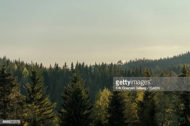 view of trees against sky - treetop stock pictures, royalty-free photos & images