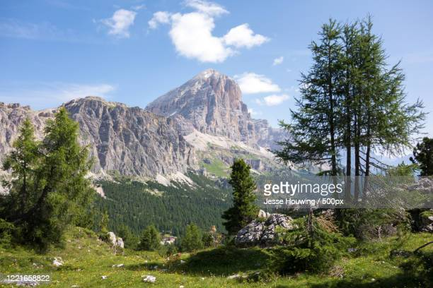 view of trees and mountain,livinallongo del col di lana, belluno, italy - jesse stock pictures, royalty-free photos & images