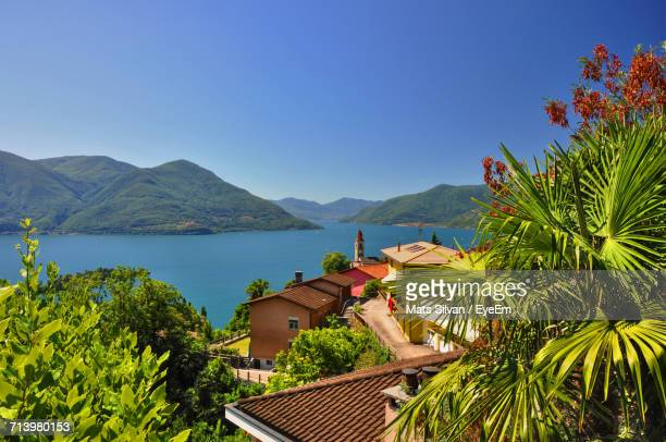 view of trees and plants against blue sky - ascona stock photos and pictures