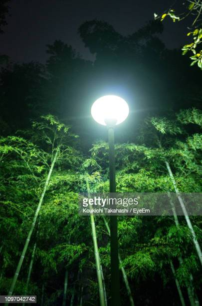 View Of Trees And Street Light In Forest At Night
