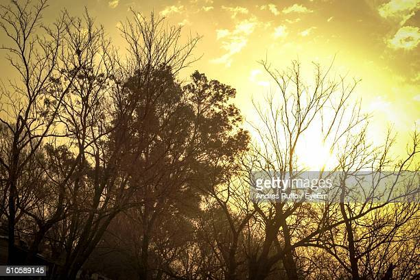 view of trees at sunset - andres ruffo stock photos and pictures