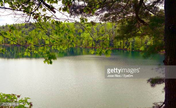 view of trees by calm lake - gatineau stock photos and pictures