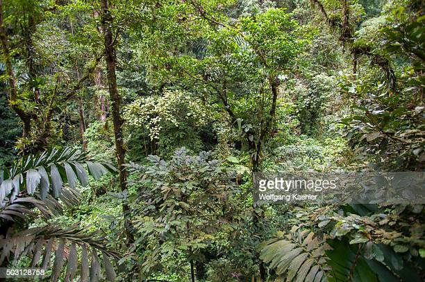 View of trees covered with epiphytes and bromeliads in the rainforest near the Arenal Volcano in Costa Rica.
