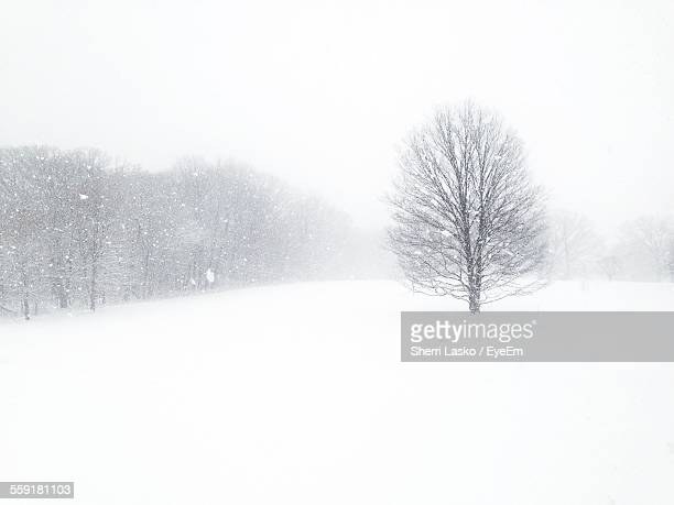 View Of Trees During Snowing
