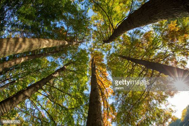 View of trees from down to up with beautiful colours in autumn season
