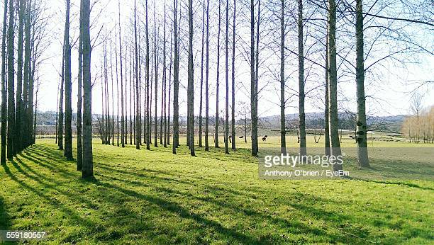 view of trees in field - fermoy stock photos and pictures