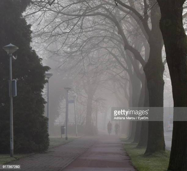 View Of Trees In Foggy Weather