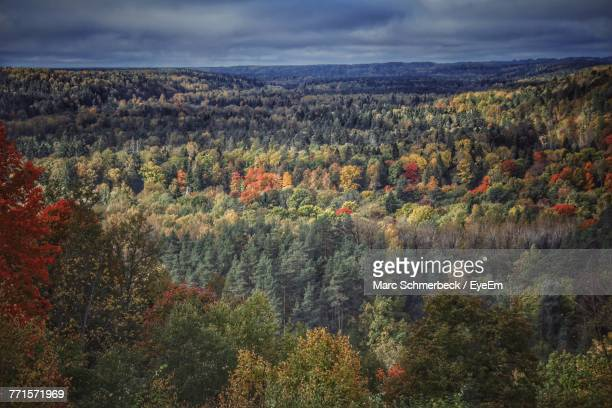 View Of Trees In Forest Against Cloudy Sky