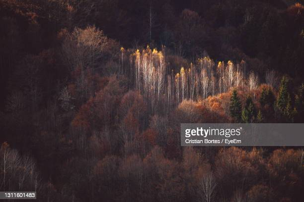 view of trees in forest during autumn - bortes stock pictures, royalty-free photos & images