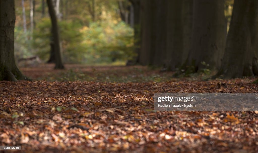 View Of Trees In Forest During Autumn : Stockfoto