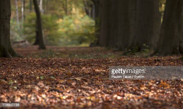 view of trees in forest during autumn - paulien tabak stock pictures, royalty-free photos & images