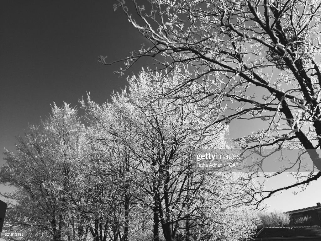 View of trees in forest during winter : Stock Photo