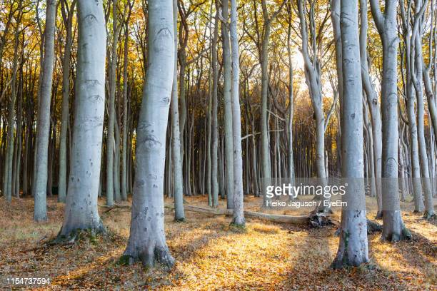 view of trees in forest - rostock stock pictures, royalty-free photos & images