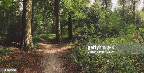 view of trees in forest - bortes stock pictures, royalty-free photos & images