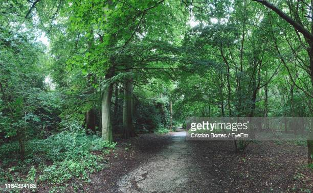 view of trees in forest - bortes stock photos and pictures