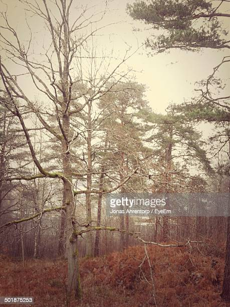 view of trees in forest - västra götaland county stock pictures, royalty-free photos & images