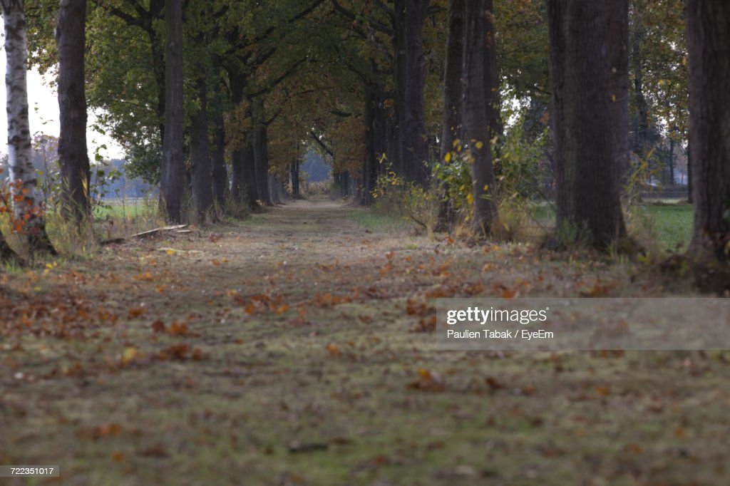 View Of Trees In Forest : Stockfoto