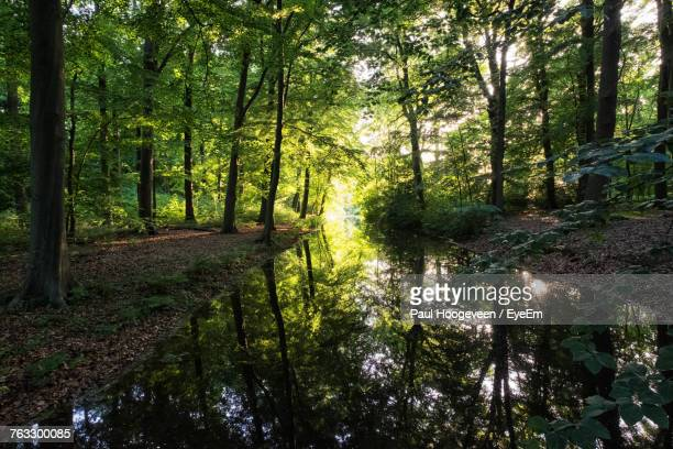 view of trees in forest - hilversum foto e immagini stock