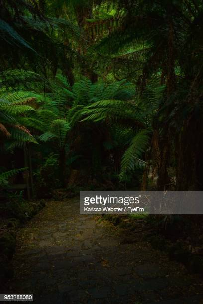 view of trees in forest - rainforest stock pictures, royalty-free photos & images