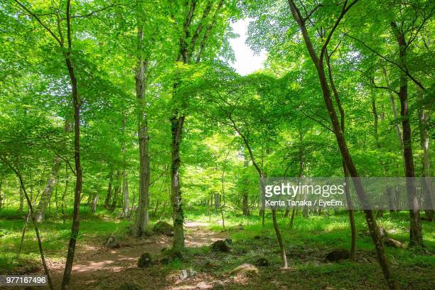 view of trees in forest - 森林 ストックフォトと画像