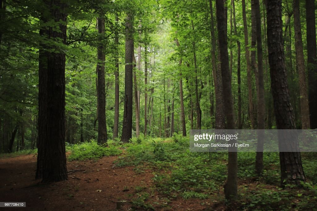 View Of Trees In Forest : Stock Photo