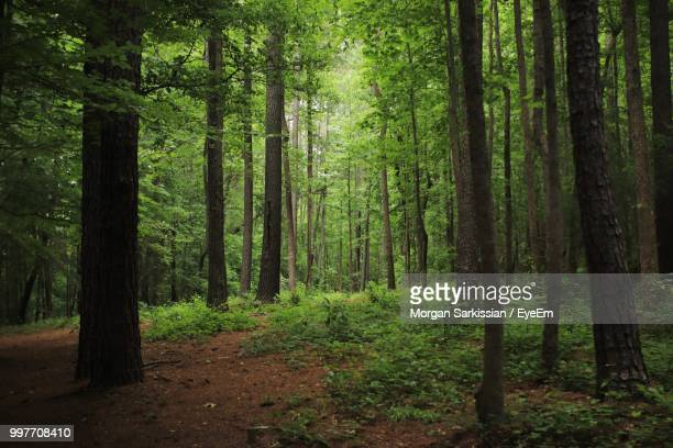 view of trees in forest - pine woodland stock pictures, royalty-free photos & images