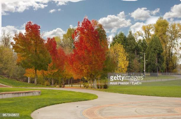 View Of Trees In Park During Autumn