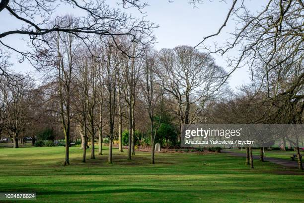 view of trees in park - bare tree stock pictures, royalty-free photos & images