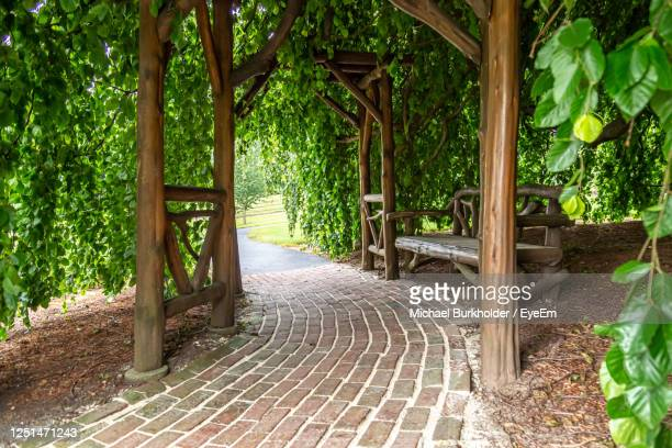 view of trees in park with bench under arbor - 中庭 ストックフォトと画像