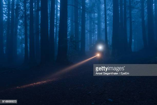 view of trees in the forest at night - alien stock photos and pictures