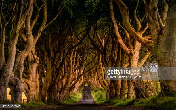 view of trees in the forest - ireland stock pictures, royalty-free photos & images