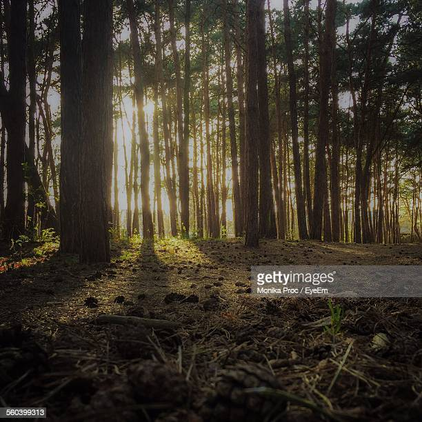view of trees in the forest - pomorskie province stock photos and pictures