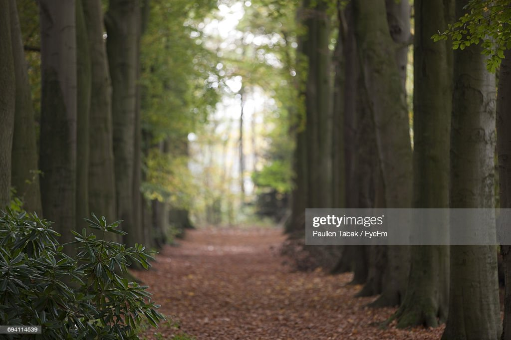 View Of Trees In The Forest : Stockfoto