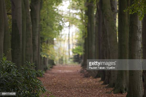 view of trees in the forest - paulien tabak foto e immagini stock