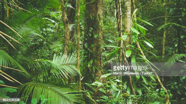 view of trees in the forest - tropical tree stock pictures, royalty-free photos & images
