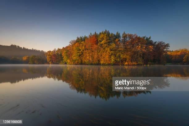 view of trees on island, thal, austria - thal austria stock-fotos und bilder