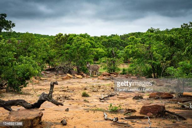 view of trees on landscape against sky - pretoria stock pictures, royalty-free photos & images